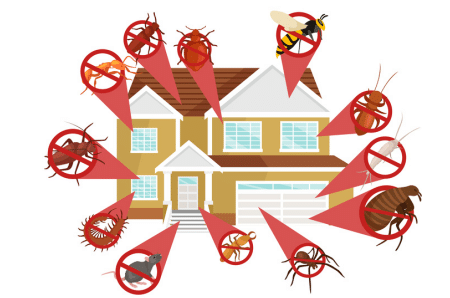Best Pest Control Companies Near Me