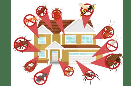 Best Pest Control Companies Near Me